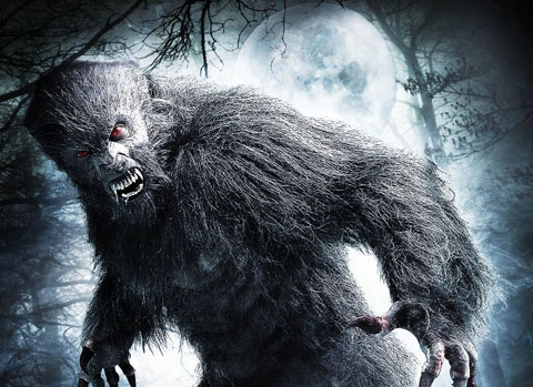 Grimm Up North: Grimmfest 2012 Festival Review