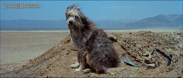 Tim McIntire (voice) in A Boy and His Dog (1975)