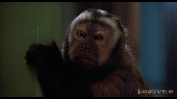 George A. Romero's Monkey Shines (1988) [click to enlarge]