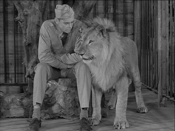 """He Don't Look So Tame To Me!"" Carleton Carpenter and Pal Take on the Army in Fearless Fagan (1952)"