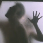 Deadly Chemistry: Sex and Psychosis in the Films of Kristine Peterson